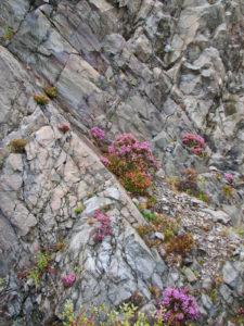 Scotland Flowers
